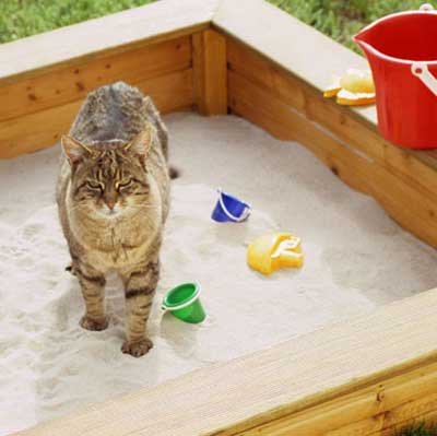 how to stop cats from pooping in yard